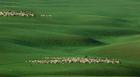 辽阔的内蒙古大草原